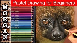 Pastel Drawing for Beginners : Wildlife art techniques : Jason Morgan