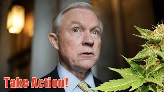 Jeff Sessions Will Wage War on Marijuana as Attorney General—Let