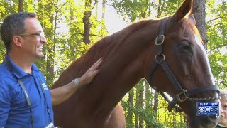 Thoroughbred with esteemed legacy now living out her life on Apex farm
