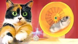 Ein Hamster erzeugt Strom!
