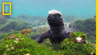 Dive Into the Wildlife-Rich Waters of the Galápagos | National Geographic