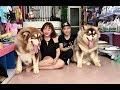 NTN Vlog tố Mật Pet lừa bán Alask...mp3