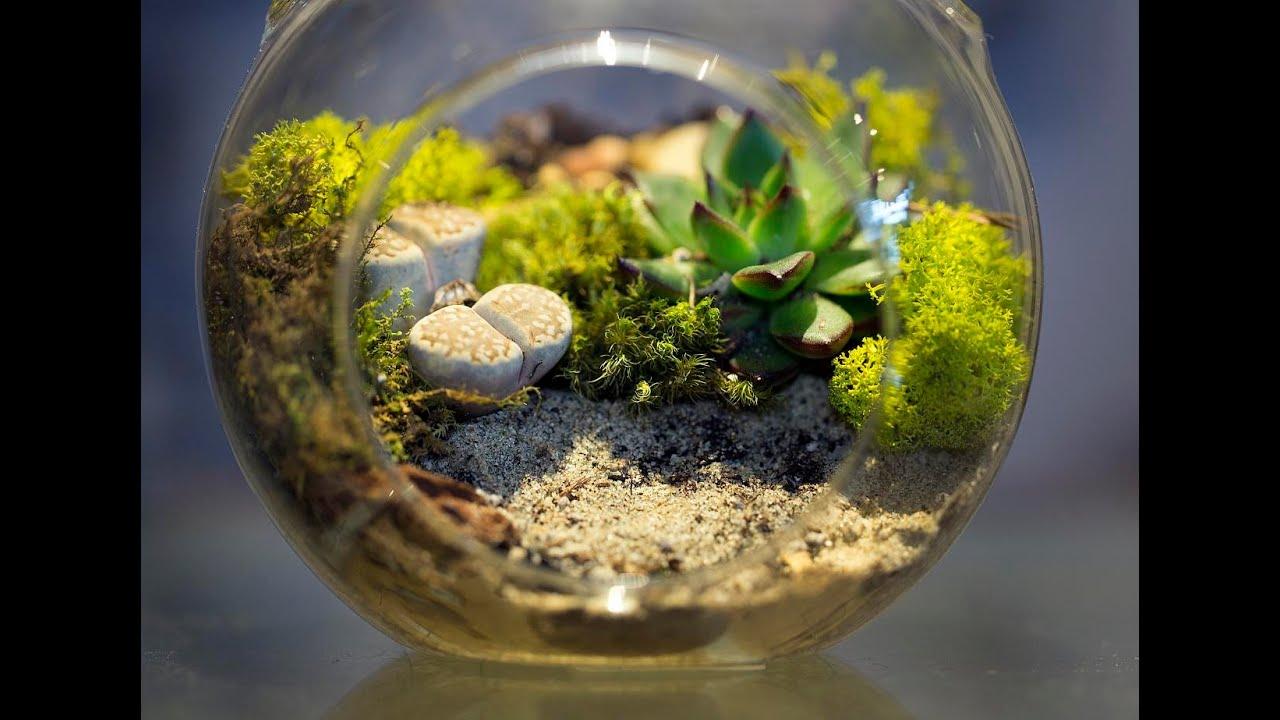Закрытая экосистема своими руками