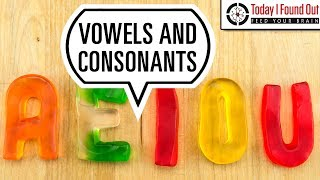 What Makes a Vowel a Vowel and a Consonant a Consonant