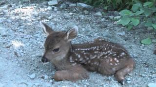"Baby Deer calls Logger ""Mom""."