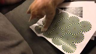 kucing keliru dengan ilusi optik