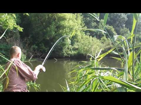 Ловля сазана летом видео