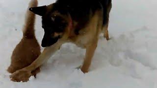 Animals Can Be Jerks! (June 2018) | FailArmy