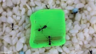 Tisch mit einem 3D Stift für meine Ameisen gemacht
