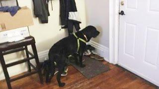 Der todkranke Hund besteht mitten in der Nacht auf einen Spaziergang. Was nun folgt - WOW!