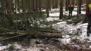 Holzfäll-Aktion Landau