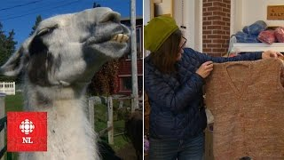 From pasture to sweater: making wool and clothing at Baynoddy