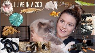 MEET ALL MY 30+ PETS AGAIN....(my little zoo)