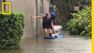 Watch Photographer Evacuate Mom and Dogs From Harvey