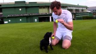 Andy Murray meets puppies in training