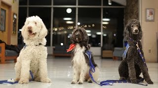 Therapy dogs take care of their people at West Virginia University