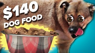 $10 Dog Food Vs. $140 Dog Food