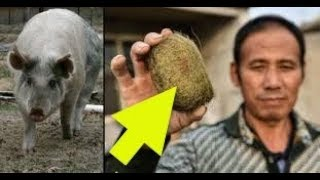 After Finding This Mysterious Object In His Pig s Gut, A Chinese Villager s Life Changed Forever