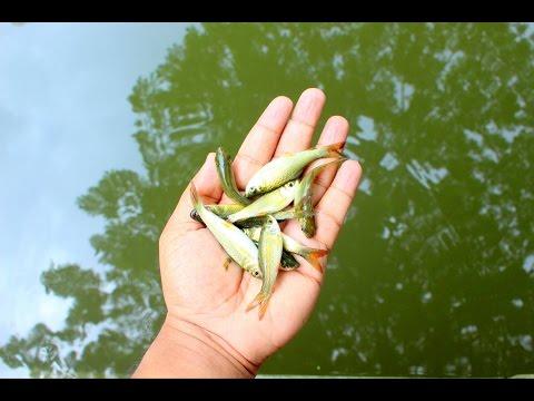 Как сделать мини ловушку для рыбы видео