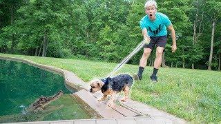MONSTER IN POND VS DOG!!