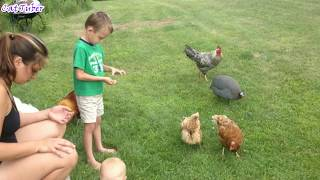 Animals Can Be Jerks - Best Funny Compilation 2017 - AFV Try Not To Laugh or Grin Challenge