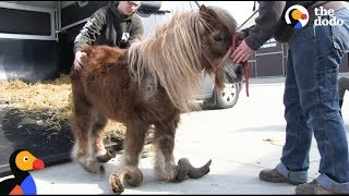 Neglected Pony Hooves Were So Long He Couldn