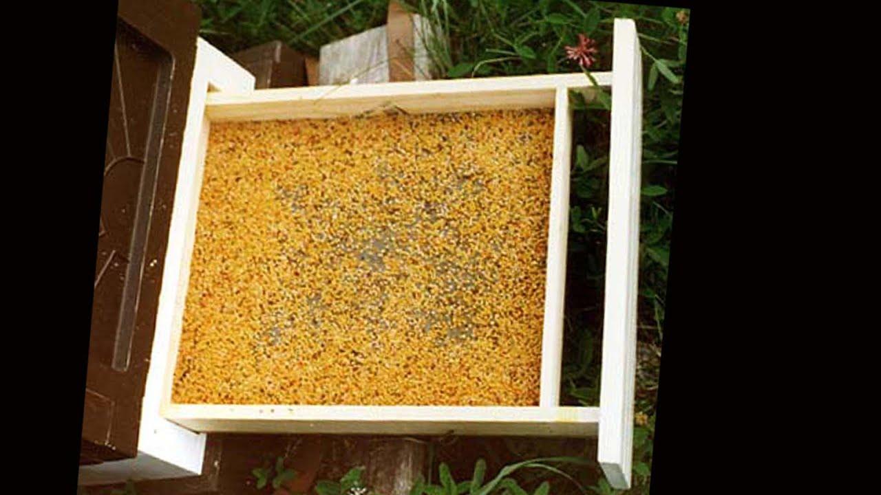 Сушилка для пчелиной пыльцы своими руками