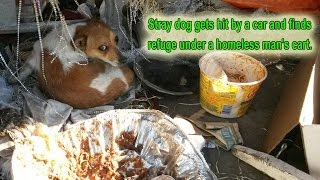Stray dog gets hit by a car and finds refuge under a homeless man