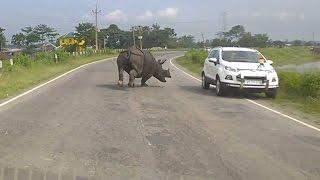 Rhino Charging Down Indian Highway