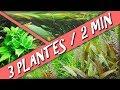 3 PLANTES D