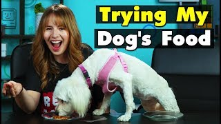 Dog Owners Try Their Dog