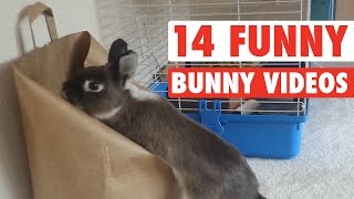 14 Funny Bunny Videos || Awesome Bunnies Compilation