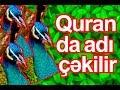 CƏNNƏTDƏN QOVULAN QUŞ - TOVUZ QUŞUmp3