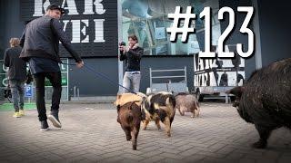 #123: Varkensbende [OPDRACHT]
