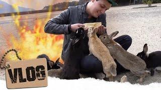 Bunny-Invasion! - Japans Hasen-Insel Okunoshima