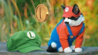SUPER MARIO CAT BROS.