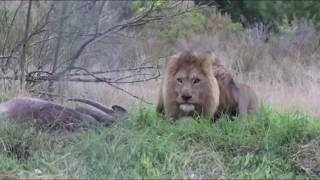 TOP 5 Scariest Animals Charging