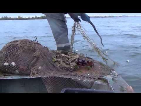 видео рыбалка ловля белого амура