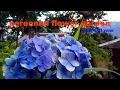 NATURAL FLOWERS & PLANTSmp3
