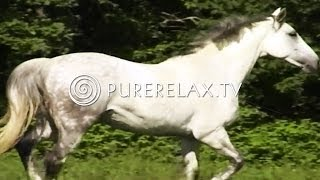 Relaxation for Children - Quiet, Harmony, Instrumental Music - HORSES
