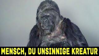 Du glaubst nicht was dieser Gorilla sagt!