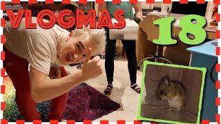Vlogmas Day 18 - An Unexpected Visitor