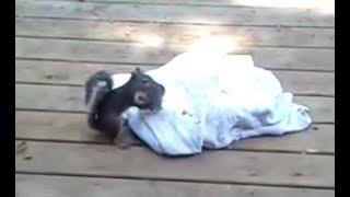 Mama squirrel coming and saving baby