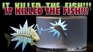 Homunculus Update - IT ELECTROCUTES THE FISH!!!!!