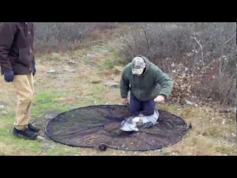 видео ловля ястреба тетеревятника