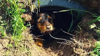 When A Couple Spotted This Dog Alone In A Ditch, They Quickly Realized How Crippled She Was