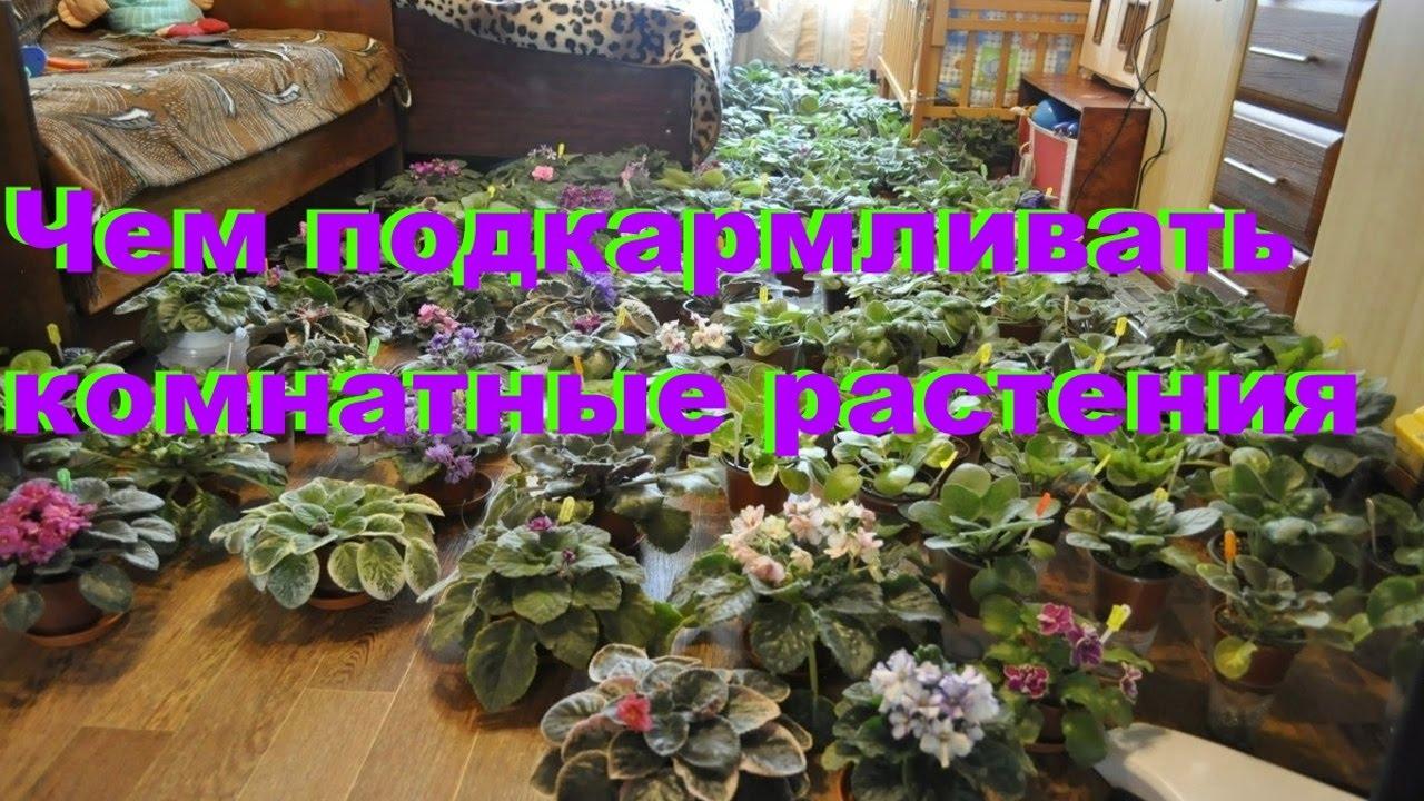 минеральные удобрения для комнатных растений фото