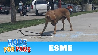 This dog was dumped in a park and left to starve...