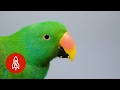 This Beautiful Parrot May Be the World