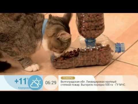 Автокормушку для кошки своими руками